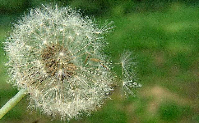 Pyłki