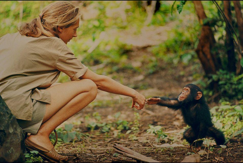 """""""Ten film sprawił, że wróciłam myślami do najlepszych dni w moim życiu"""". Poznajcie historię Jane Goodall."""