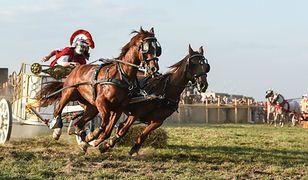 Wyścigi rydwanów podczas VIII Europejskiego Święta Bursztynu w Wieluniu (woj. łódzkie), 2014 r.