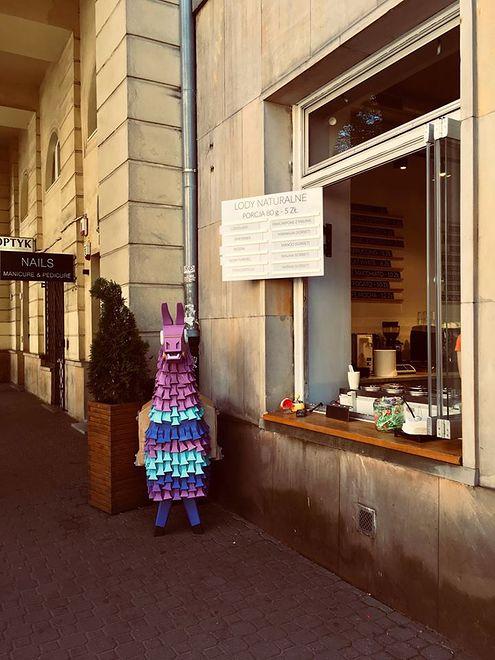 Lama trafiła nawet do Warszawy