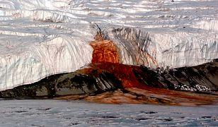 """Antarktyda - naukowcom udało się odkryć, czym jest """"krew lodowca"""" i skąd się wzięła"""