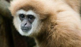 Od 2011 roku Marcin i Katarzyna P. przekazali zoo ponad 1,6 mln zł