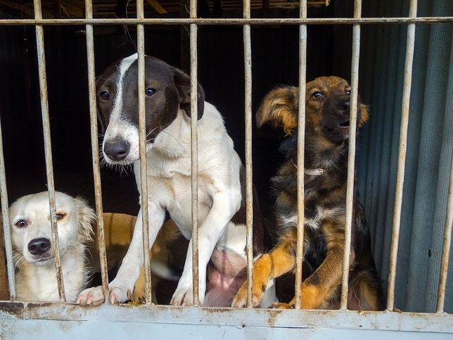 Ze schroniska ewakuowano 124 psy