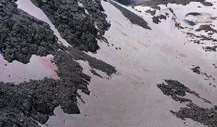 Włochy. Różowy śnieg w Alpach. Naukowcy nie mają dobrych wieści