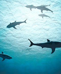 We Włoszech wyłowiono dziwny okaz rekina. Mało kto go widział