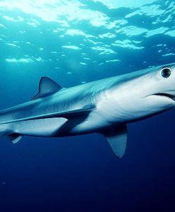 Hiszpania. Rekin na słynnym wybrzeżu. Panika wśród turystów