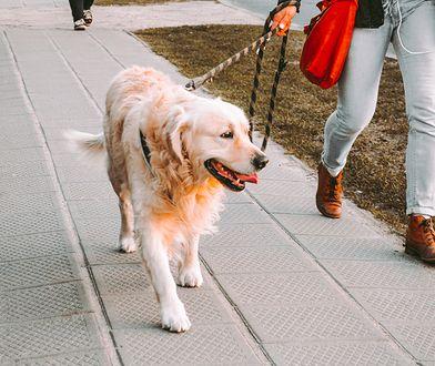 Jakie rasy psów chętnie wybierają panowie? Jaki pies jest idealny dla singla, a jaki dla rodziny?