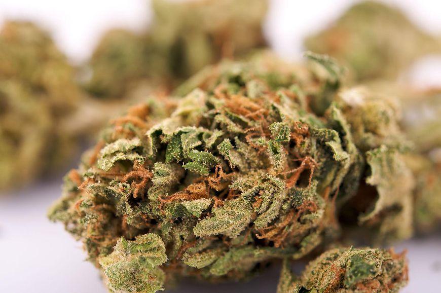 Medyczna marihuana może uleczyć raka