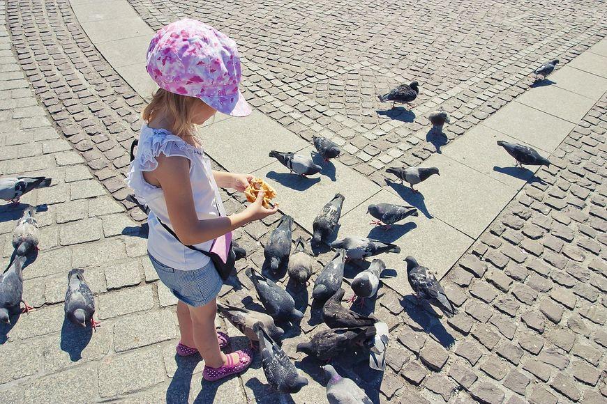 dziewczynka karmi gołębie [123rf.com]