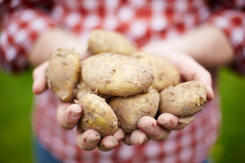 Ziemniaki nadają się do zrobienia soku