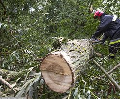 Powalone drzewa i uszkodzone dachy. Halny pędził 176 km/h