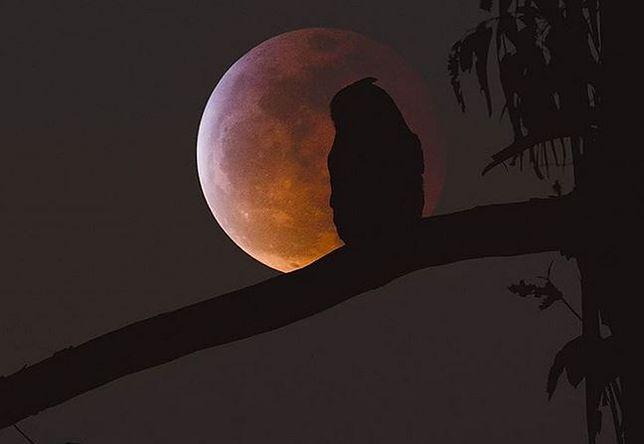 Styczniowe zaćmienie księżyca