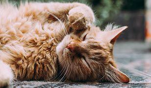 """""""Kocia"""" bakteria leczy skórę ludzi i zwierząt"""