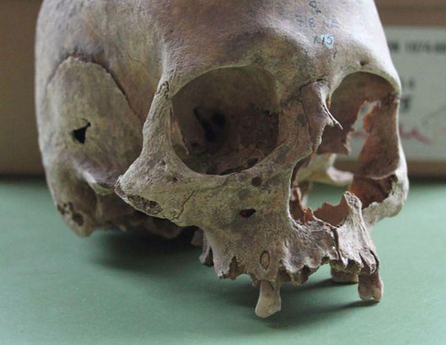 Masowy grób znaleziony pod kościołem należy do wielkiej armii wikingów