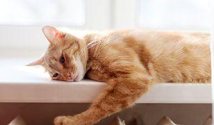 Koty często nie dają po sobie poznać emocji