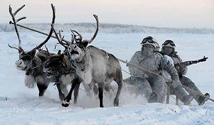 Renifery w służbie rosyjskiej armii