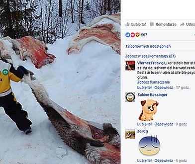 W norweskim przedszkolu pokazano dzieciom, jak zabija się renifery