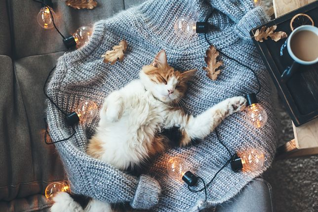 Skurczony lub rozciągnięty sweter? Możesz go uratować tymi domowymi sposobami