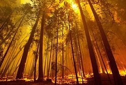Ogień u wrót Yosemite