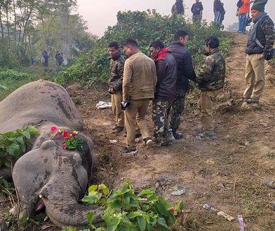 Słonie weszły prosto pod nadjeżdżający skład