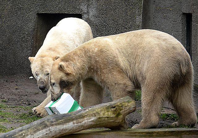 Urodziny w warszawskim zoo - zdjęcia