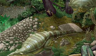 Niezwykłe odkrycie. Znaleźli szczątki nieznanego gada w Kocurach