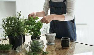 Jak hodować zioła z supermarketu? To nie takie trudne