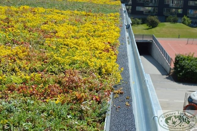 Zielony dach – modne i praktyczne rozwiązanie na lata