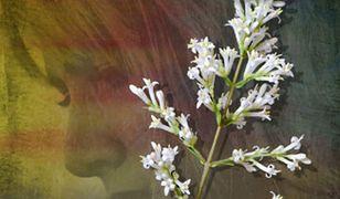kwiat-diabelskiej-gory.jpg