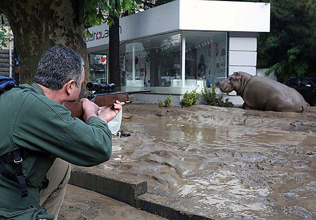 Safari na ulicach miasta