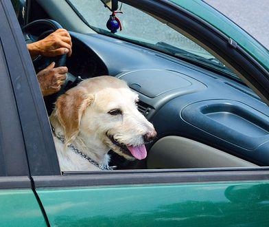 Służby miejskie apelują: w czasie upałów nie pozostawiajmy zwierząt w samochodach