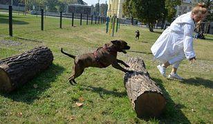 Nowy wybieg dla psów przy Ogrodzie Krasińskich