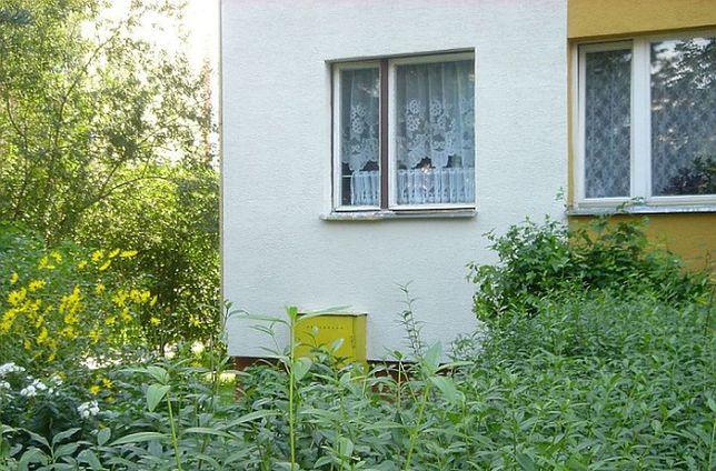 Ochrona elewacji domu - uwaga na mikroorganizmy!