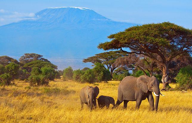 Kilimandżaro - trekking dla wytrwałych