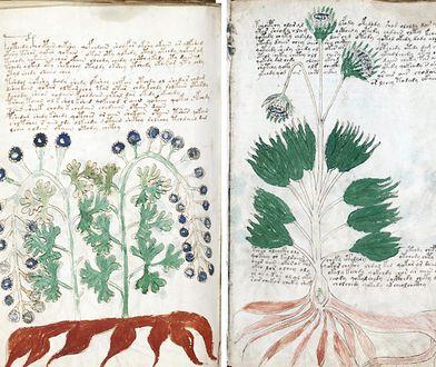 Manuskrypt Wojnicza rozszyfrowany