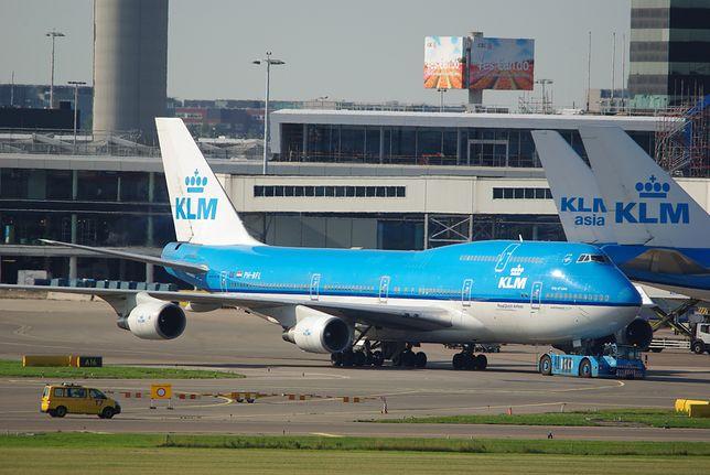 5-miesięczny pies zmarł w trakcie lotu. Podróżował z Amsterdamu do Los Angeles
