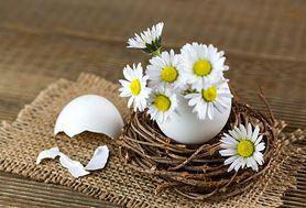 Właściwości i zastosowanie skorupek jaj. Zadziwi cię ich moc