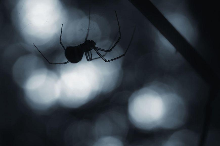 Istnieje wiele groźnych gatunków pająków