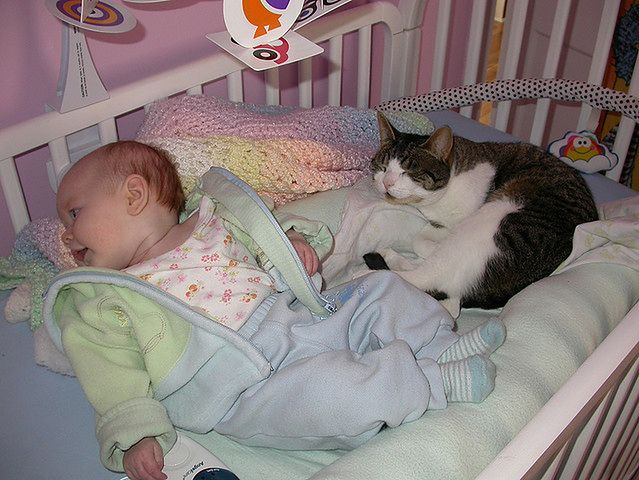 Kot w otoczeniu niemowlaka