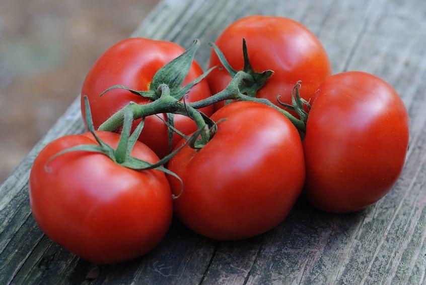 Skuteczna broń ukryta w pomidorach
