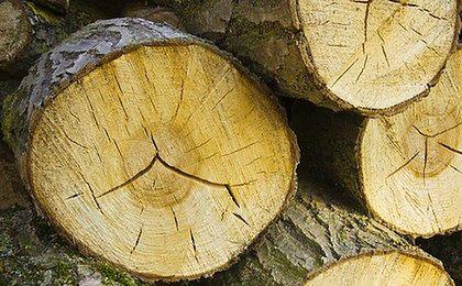 Wyższe kary za wycięcie drzew bez zezwolenia