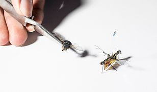 Ta mała, skrzydlata płytka to latający robot