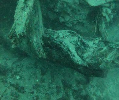 Próbki drewna przekazano Laboratorium Morskiemu na wyspie Dauphin