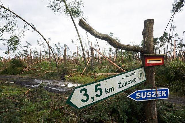 Zniszczony przez nawałnicę las w Suszku