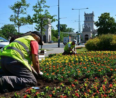Warszawa. Miejscy ogrodnicy ruszają do boju. Trzeba zasiać miejskie łąki