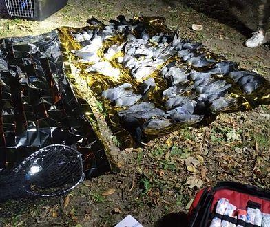 Warszawa. Martwe ptaki spadają z nieba