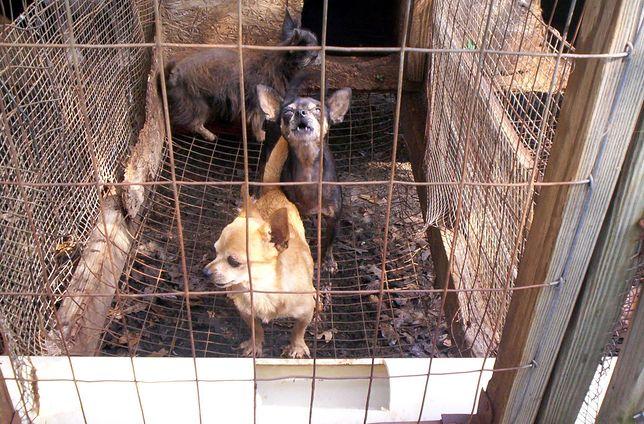 Psy przetrzymywane były w karygodnych warunkach.