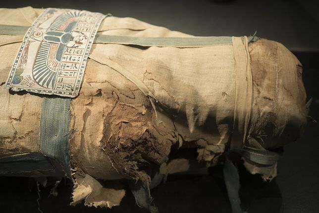 Jedna z mumii zawierała szczątki sokoła