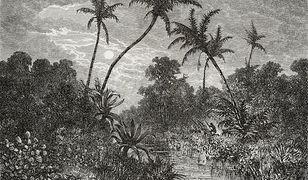 W Chinach odnaleziono najstarszy odkryty las z okresu dewonu.