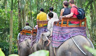 W okolicach Chiang Mai znajduje się kilka ośrodków, w których turyści mogą skorzystać z jedno- lub dwudniowych wycieczek na słoniowym grzbiecie